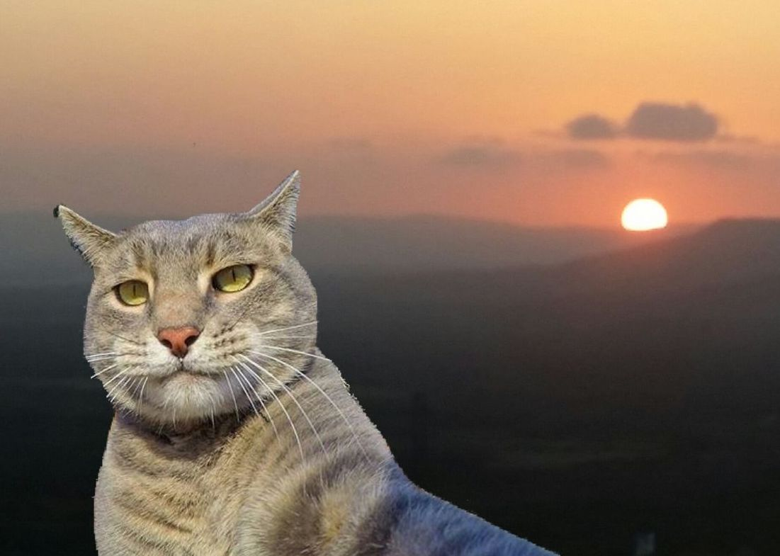 The Internet Found a Cat Selfie Sticker and This Is How It