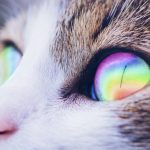 cat eye rainbow light edit on picsart