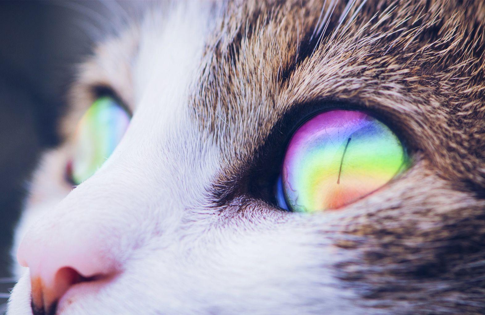 cat eye rainbow light edit on picsart