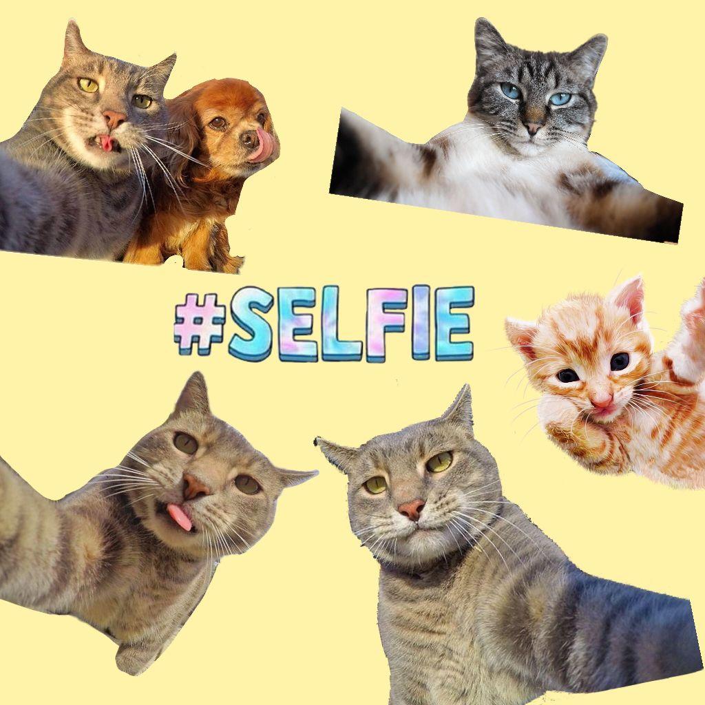 selfie cat stickers on picsart