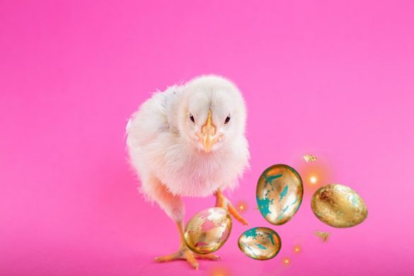 Chicken photo with pink background edited with picsart easter eggs sticker