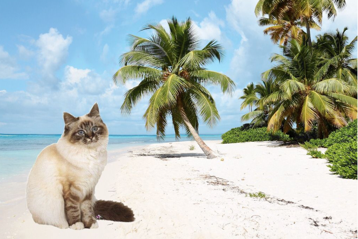 #NationalCatDay Post with cat on the beach edited with PicsArt