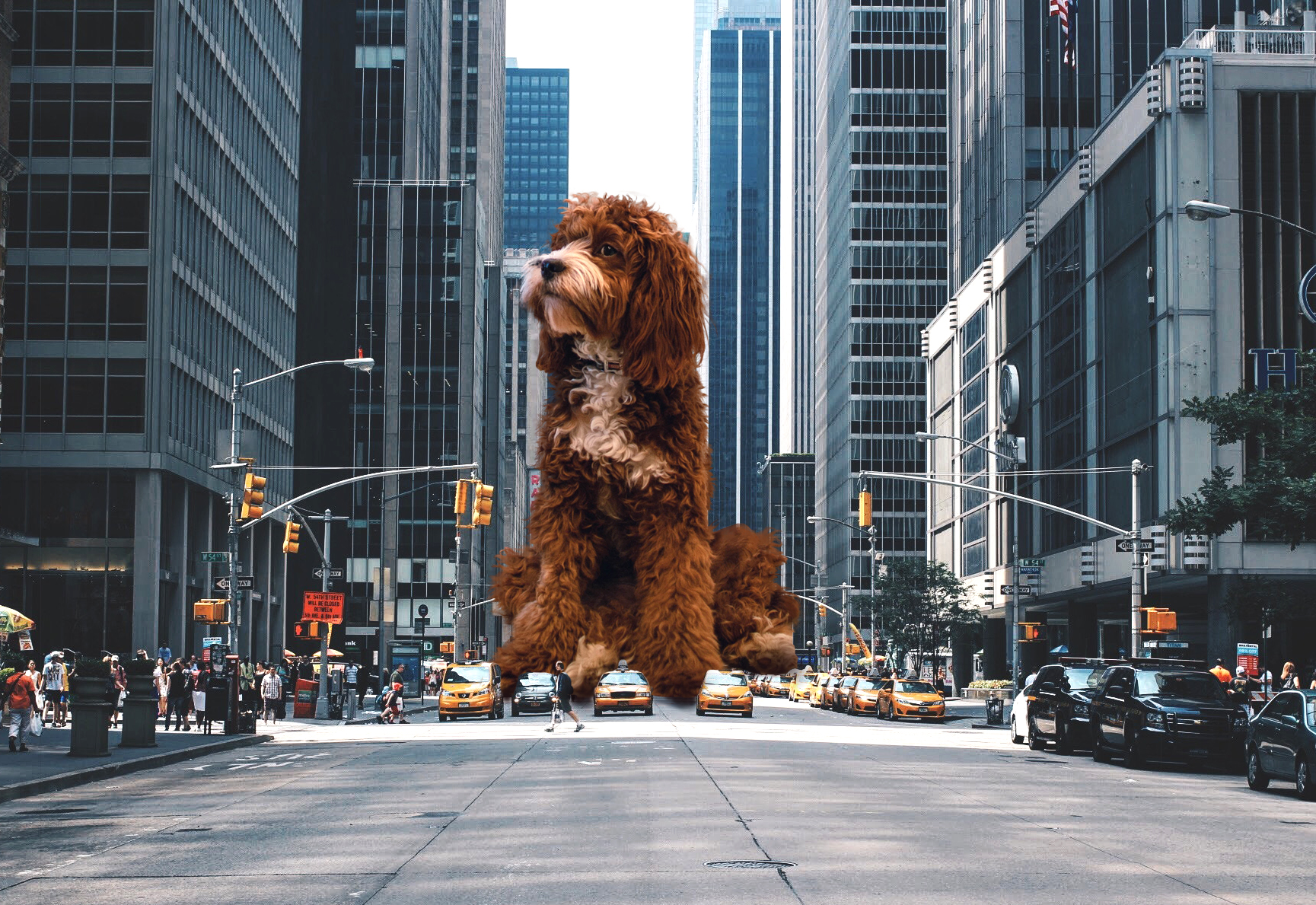 Giant dog in the middle of the street edited with PicsArt stickers
