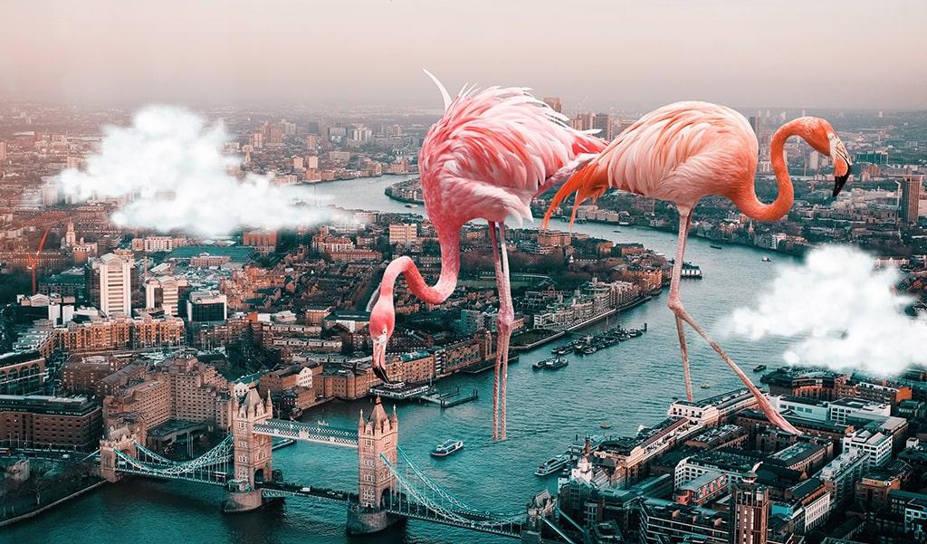 surreal flamingo edit