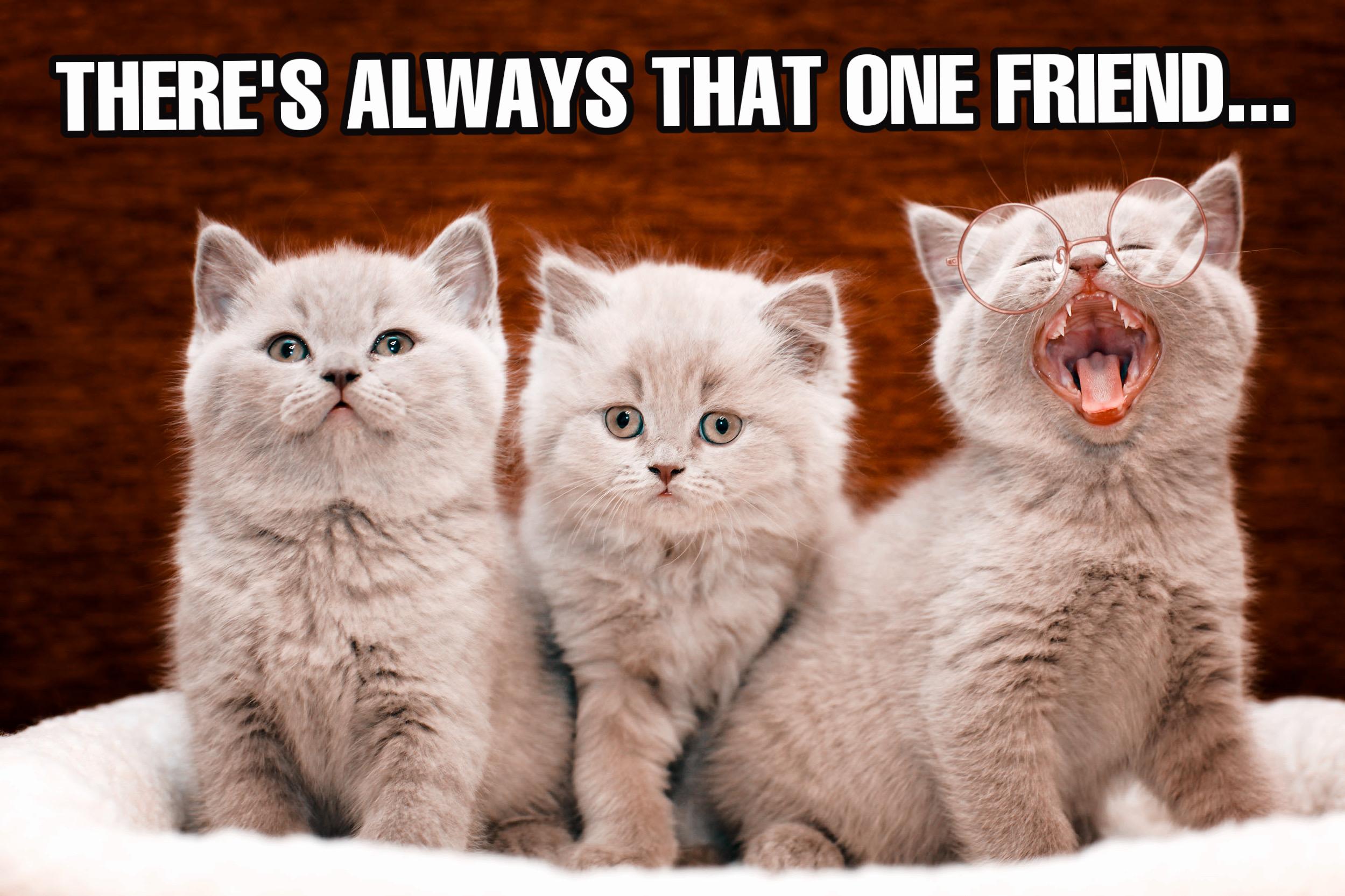 Meme of three kittens made with meme maker tool