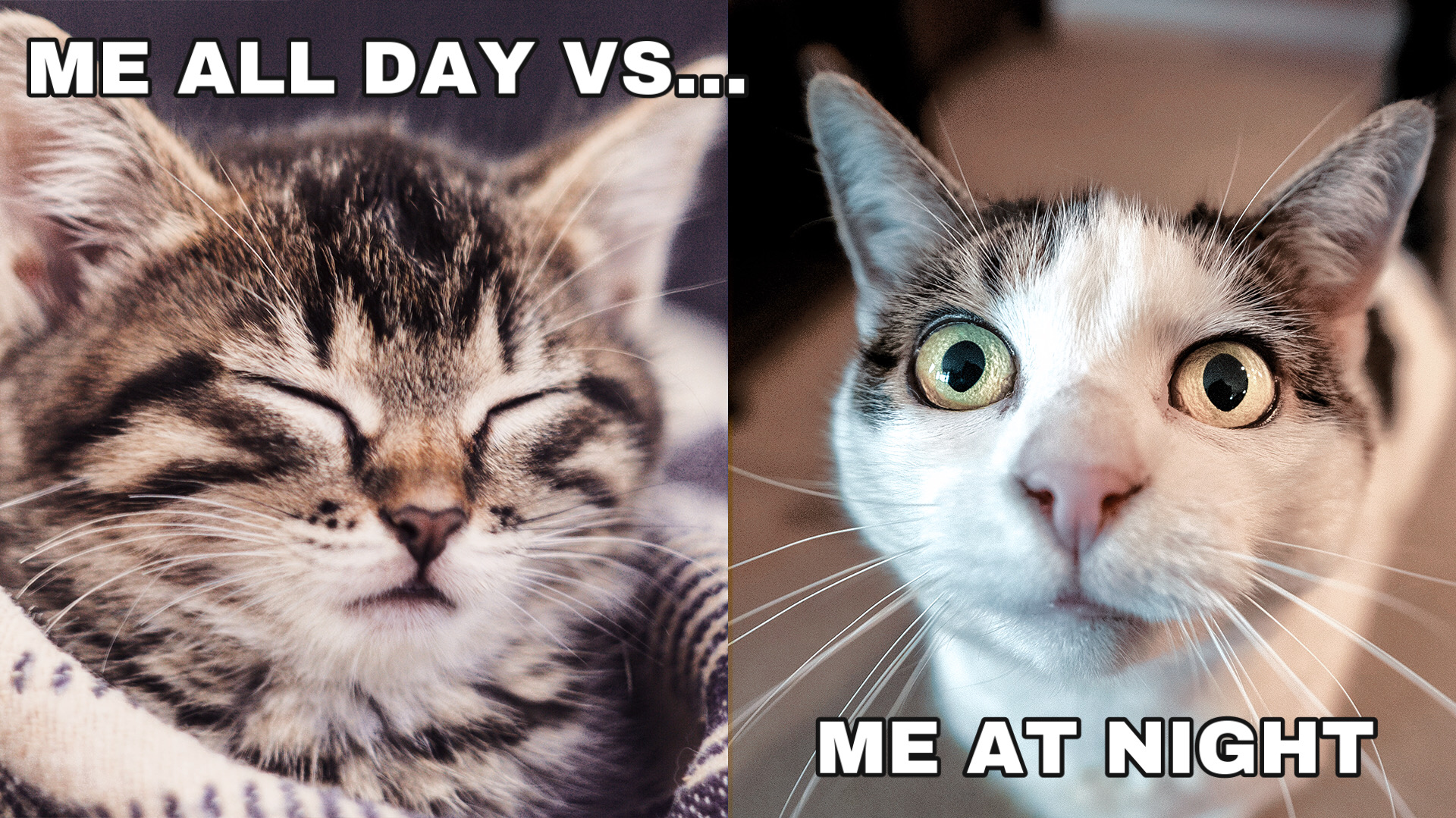 Meme of two cats made with meme maker tool