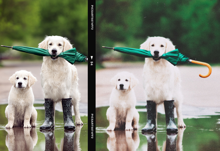 Film grain effect on dogs