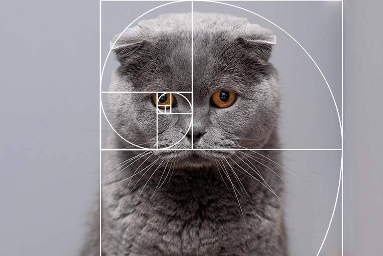 Golden ratio on a cat