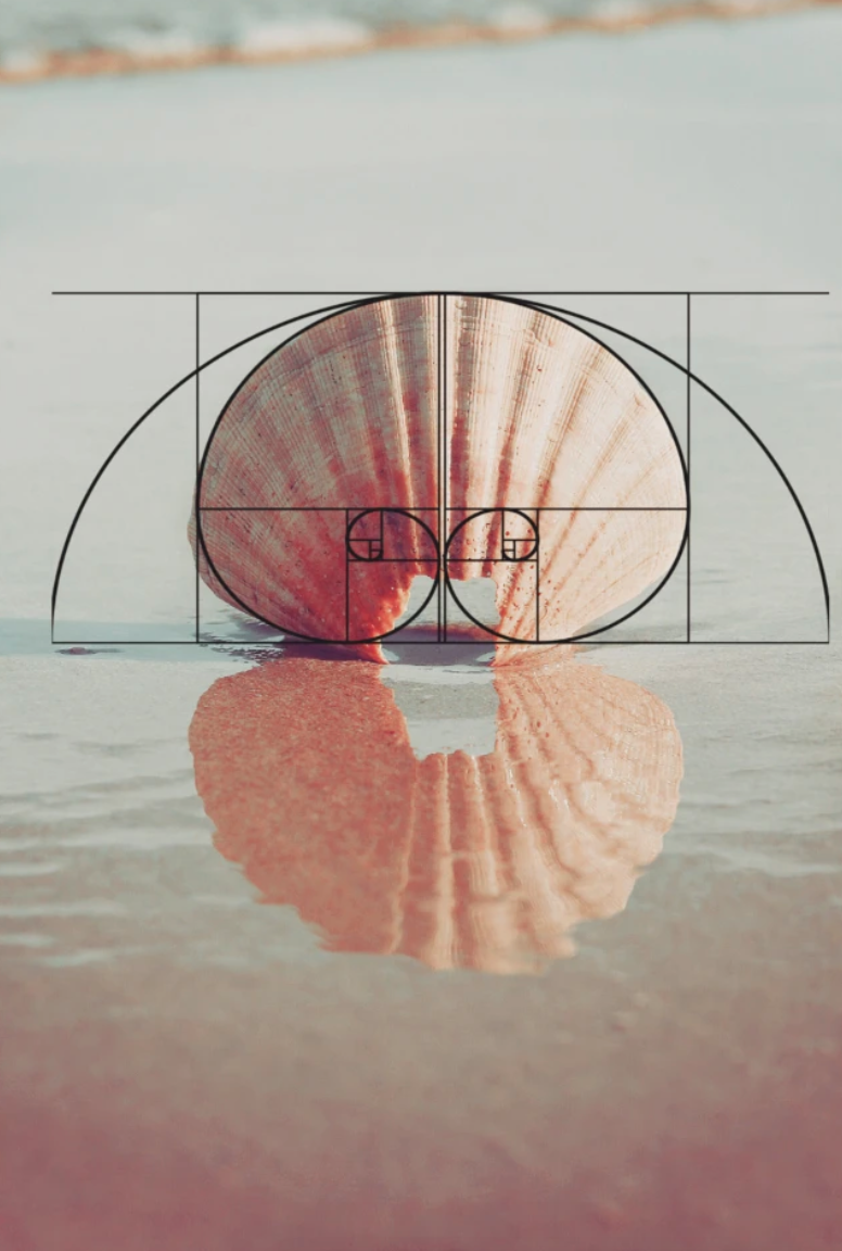 Golden ratio on a shell