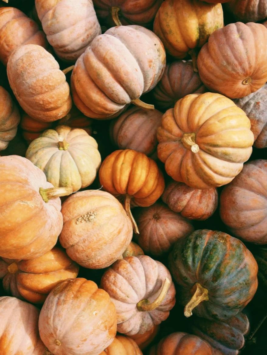 Pumpkins stylish