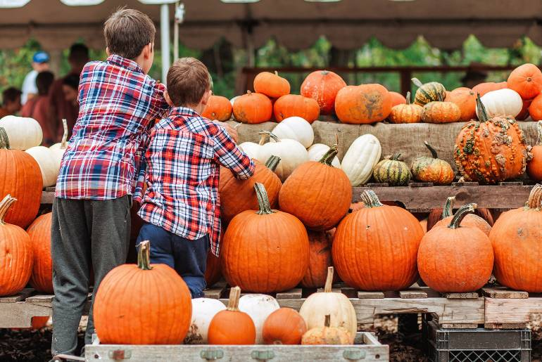 Pumpkin patch photo with two boys wearing plaid