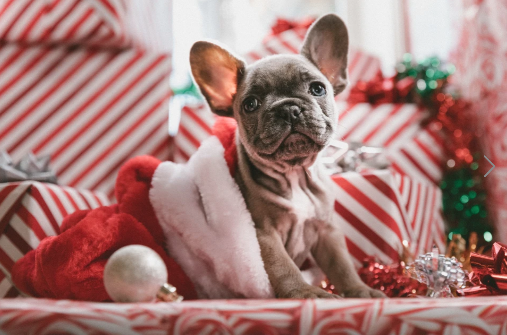 Puppy with Christmas presents