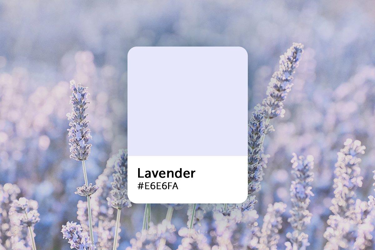 lavender-color