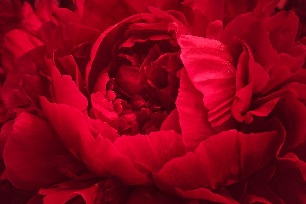 Crimson color